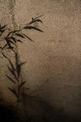 mk wall 4 by darkhorse120