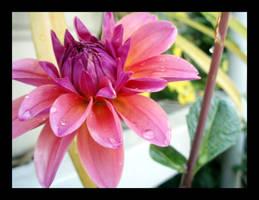 Sky Lotus by LinaraQ