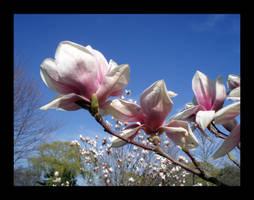 Bloom by LinaraQ