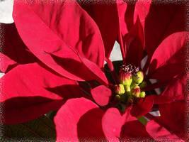 Happy Holidays by LinaraQ