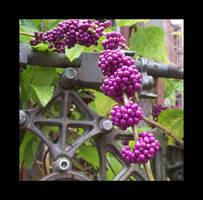Ewok Berries by LinaraQ