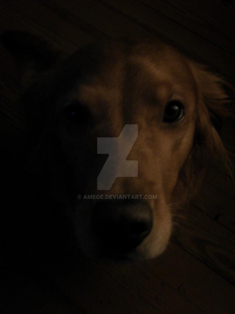 Shadow Dog by aMege