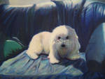 Fuzzy Bijou