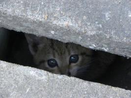 Little cat hided in a ditch