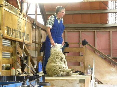 Farmer and sheep