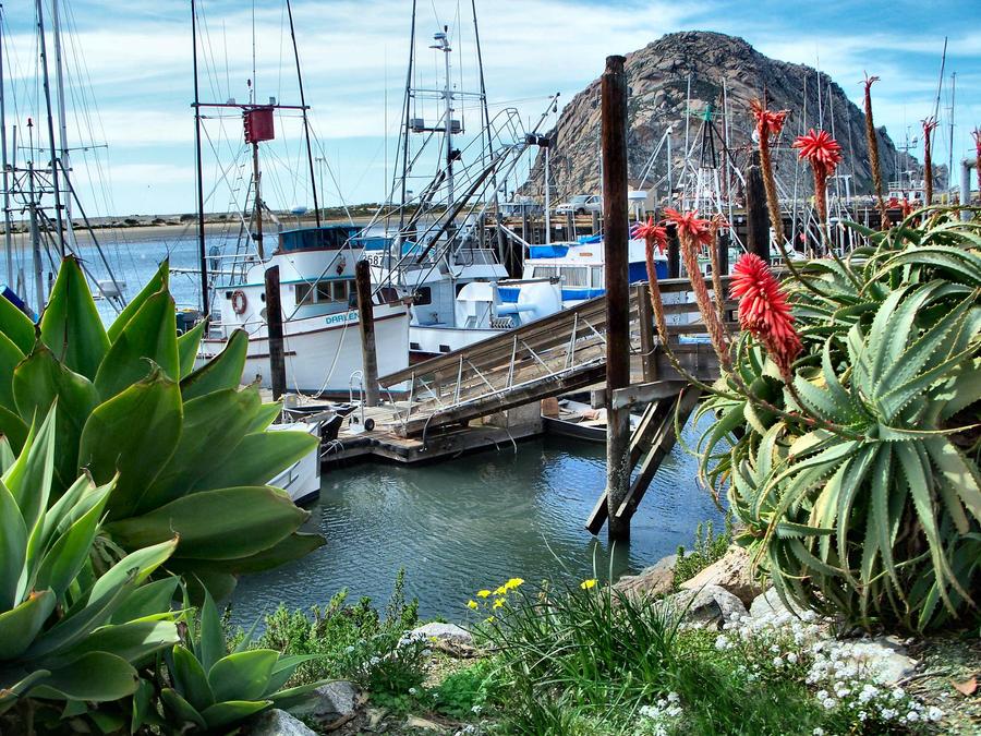 Morrow Bay Calirofnia by Royce-Barber
