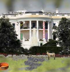 White House Gone Wild