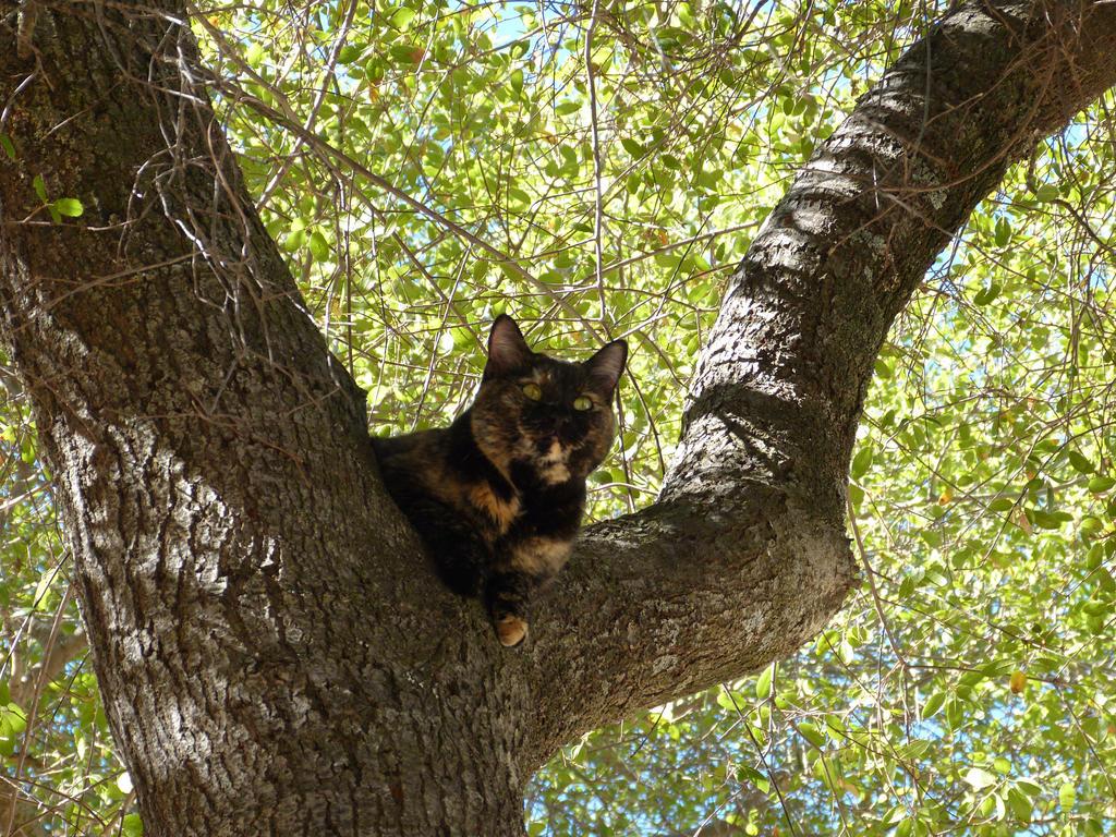 cat in tree by royce barber on deviantart. Black Bedroom Furniture Sets. Home Design Ideas
