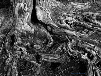 Roots by OpticalIlluzens