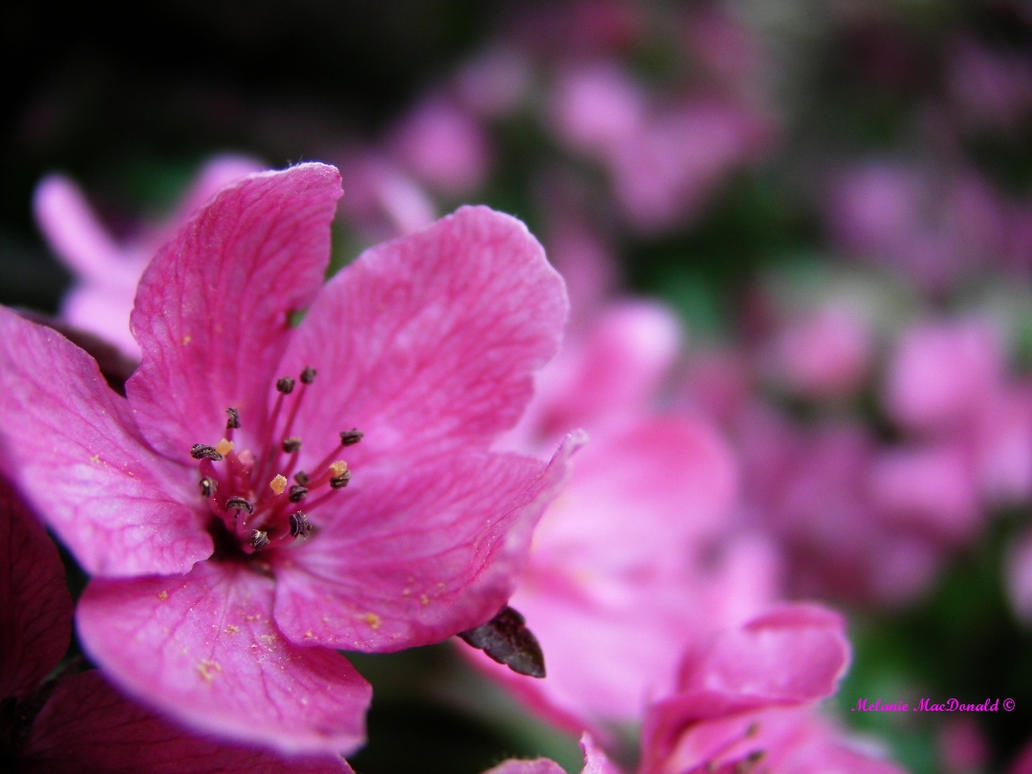Pink. by OpticalIlluzens