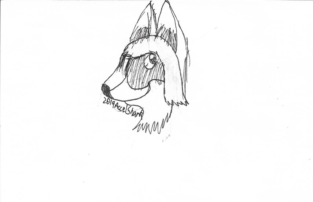 Untitled Corgi Sketch