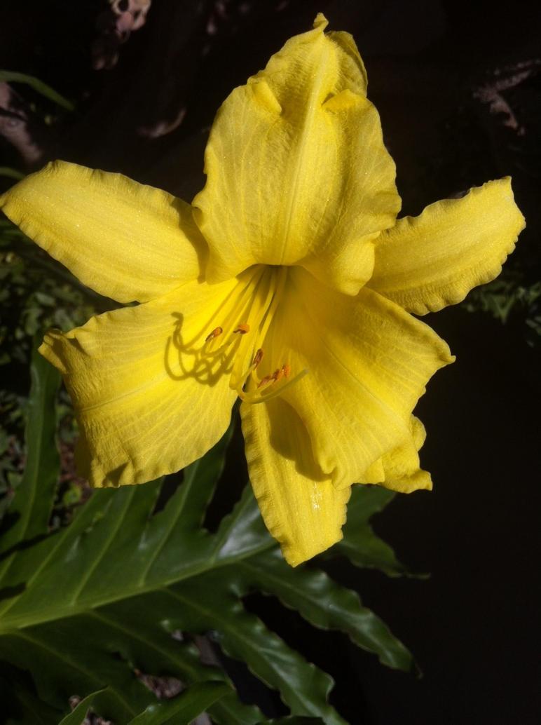 Beautiful Flower - Taken by a Friend by ZacharyWolf