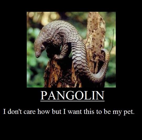 pangolin meme by ddmka on deviantart