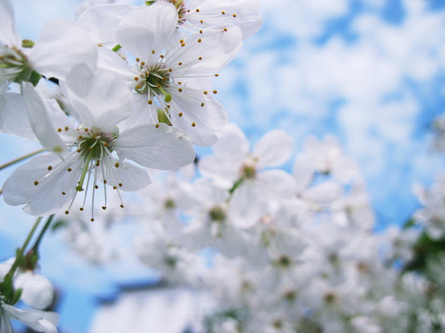 blue spring by Reyrey33