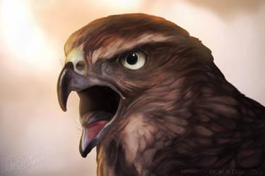 Juvenile Cooper's Hawk - Speed Art