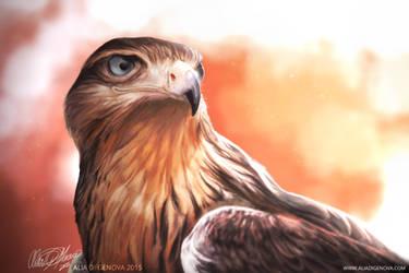 Juvenile Ferruginous Hawk - painting