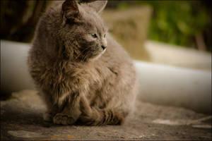 cat 2 by chocolat21