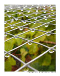 Raindrops on Wire