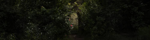 Dark Fantasy - Roses