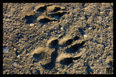 Paw Prints by MauserGirl