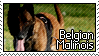 Stamp - Belgian Malinois by MauserGirl