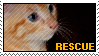Stamp - Rescue Cat by MauserGirl