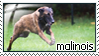 Stamp - Malinois by MauserGirl