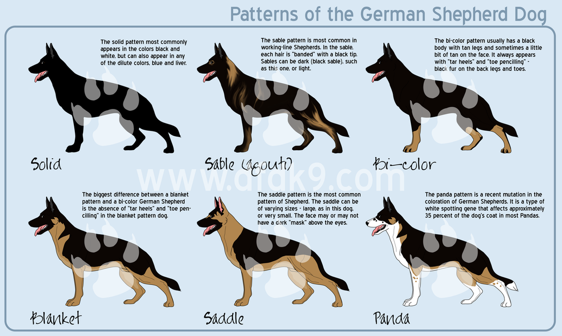 German shepherd patterns by mausergirl on deviantart german shepherd patterns by mausergirl geenschuldenfo Images