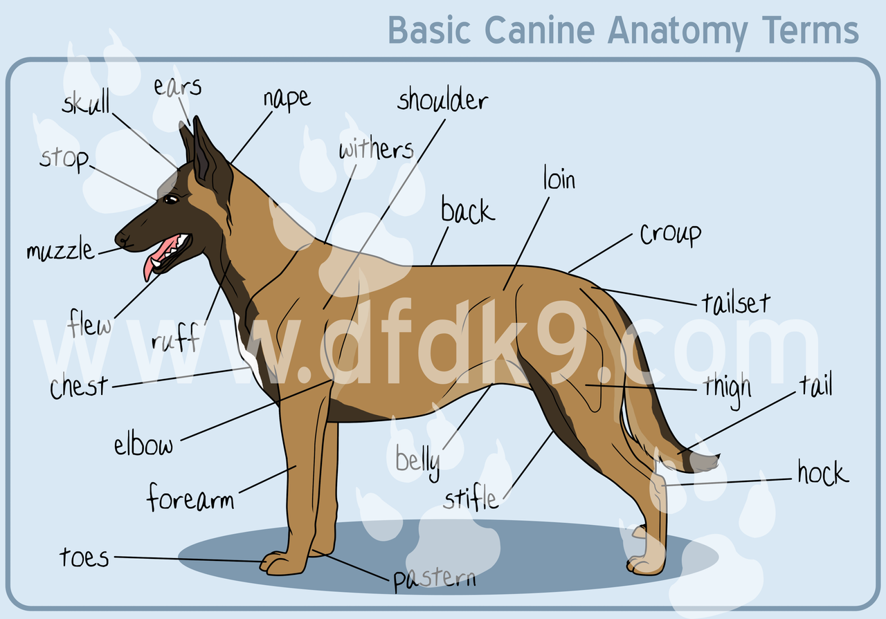 Dog Paw Anatomy Diagram, Dog, Free Engine Image For User ... Vacuum Coloring Pages
