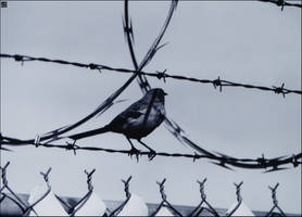 Bird On A Fence by MauserGirl