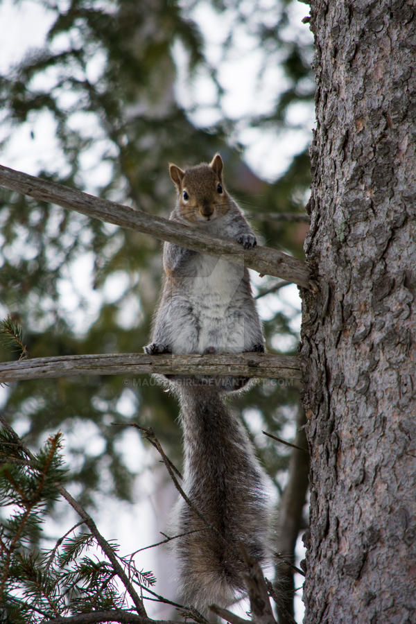 Photogenic Squirrel by MauserGirl