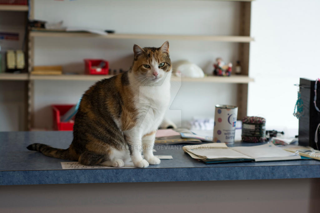 Store Cat by MauserGirl
