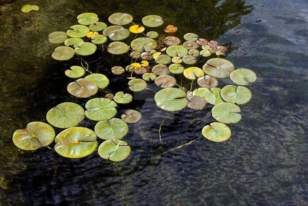 Lily Pads by MauserGirl