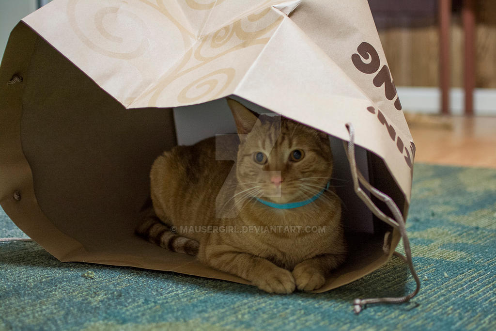Cat in a Bag by MauserGirl