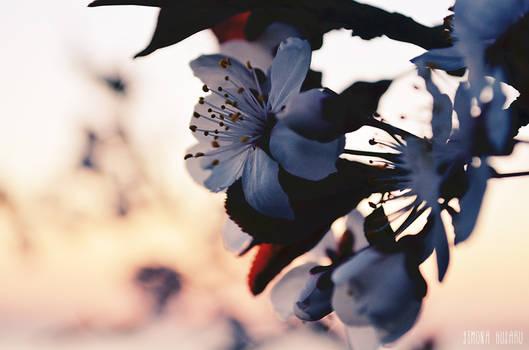 Nature's kisses - Saruturile naturii - 7