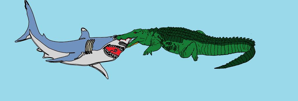 Saltwater crocodile vs white shark by SaltwaterCrocodile on DeviantArt