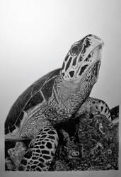 Hawksbill Sea Turtle - Ink Drawing by nasiruddeen