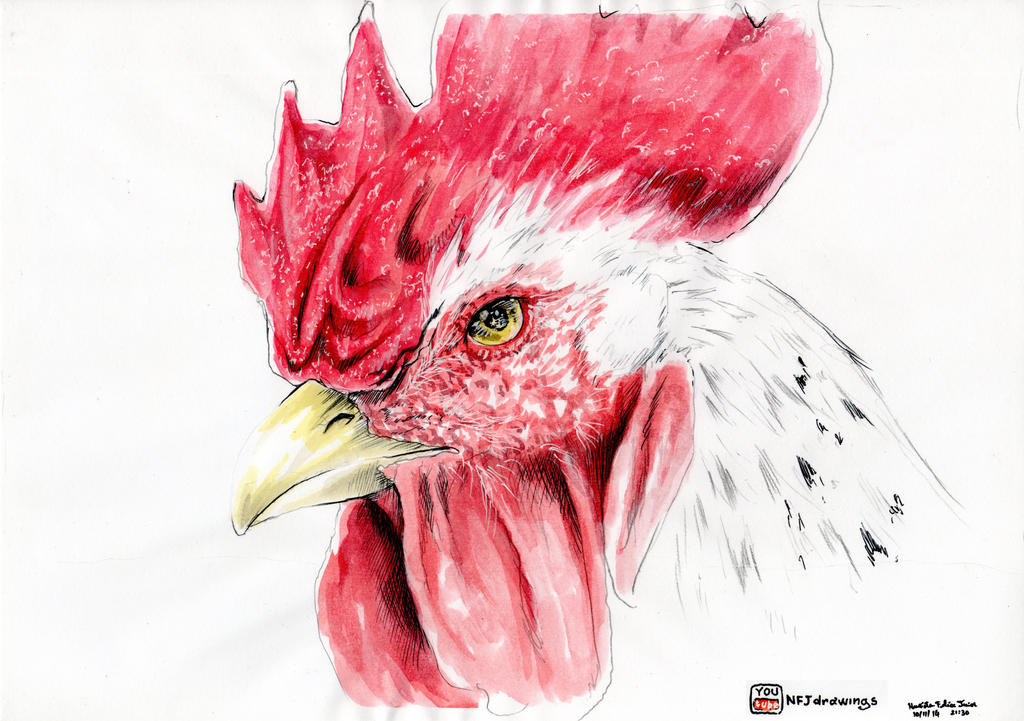 How To Draw Rooster Video S Link In Description By Burnout89 On Deviantart