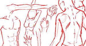 Anatomy 01