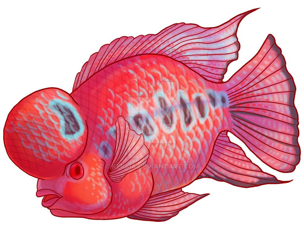 super red flowerhorn by keraia on deviantart rh deviantart com Thailand Flowerhorn Fish Discus Fish