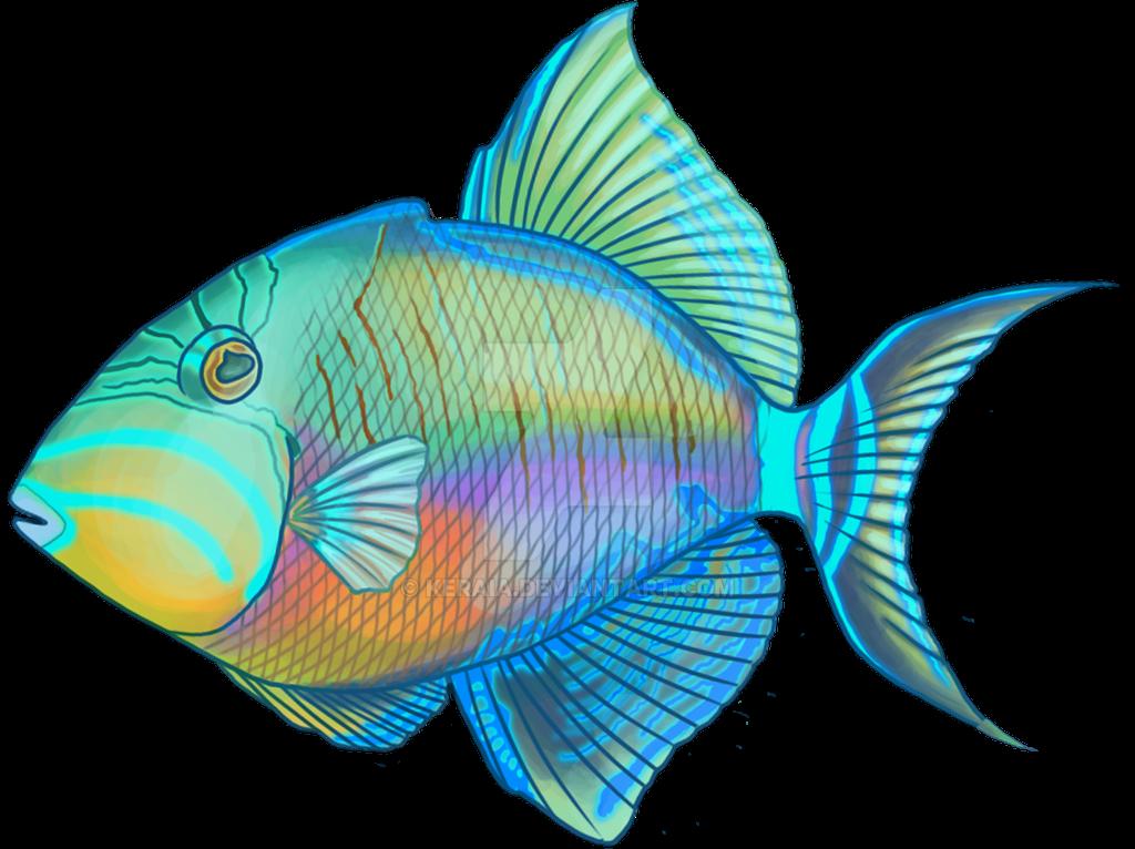 Queen Triggerfish by Keraia
