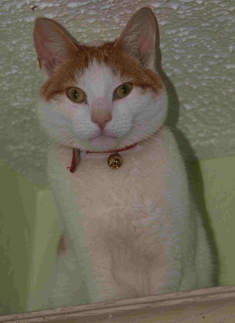 predator kitty lima by nesslauncher1