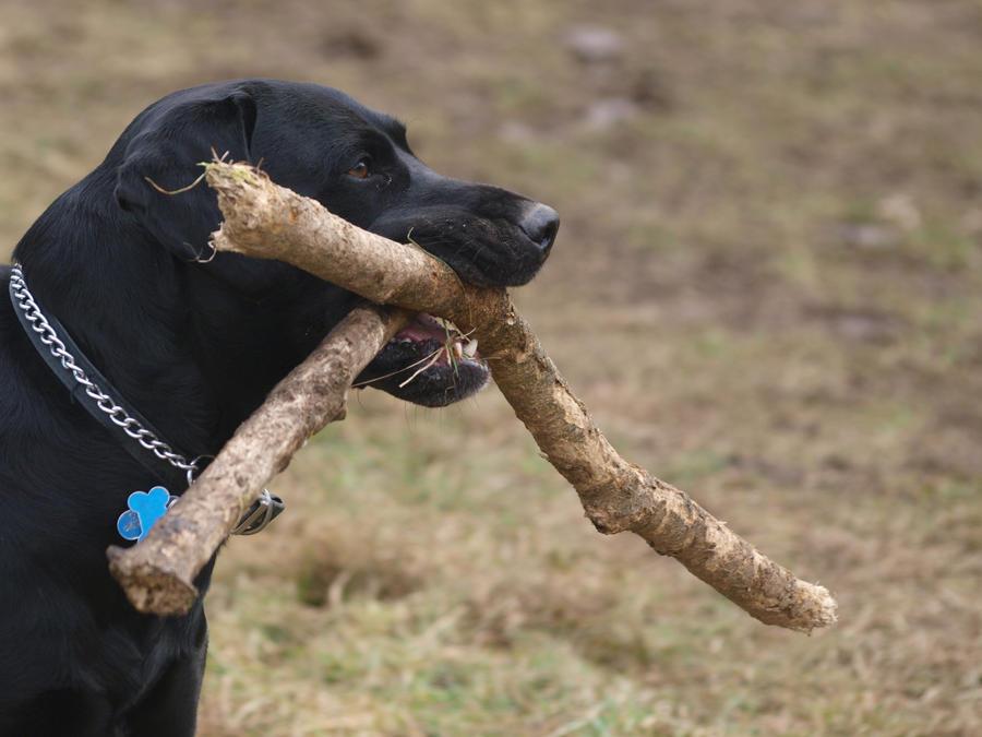 my sticks i got two by nesslauncher1