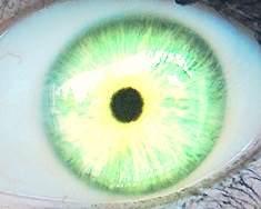 Green by KreugerBlueEyes