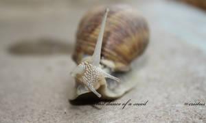 last dance of a snail