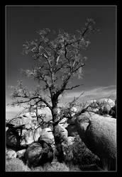 boulder.dancer by altjeringa