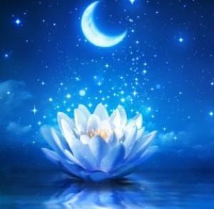 Luna-Lotus's Profile Picture