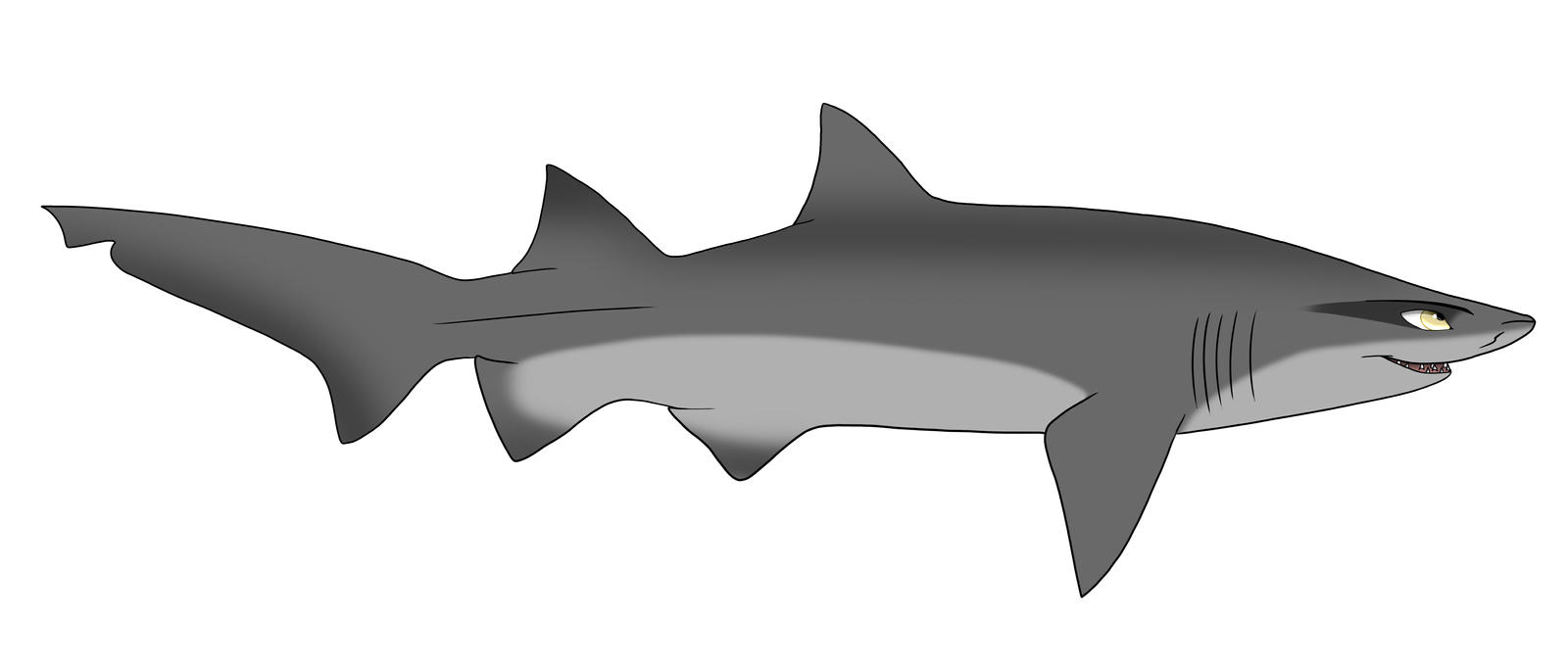 Sand tiger shark information amp pictures of sand tiger sharks - Sand Tiger Shark Drawing Photo 5
