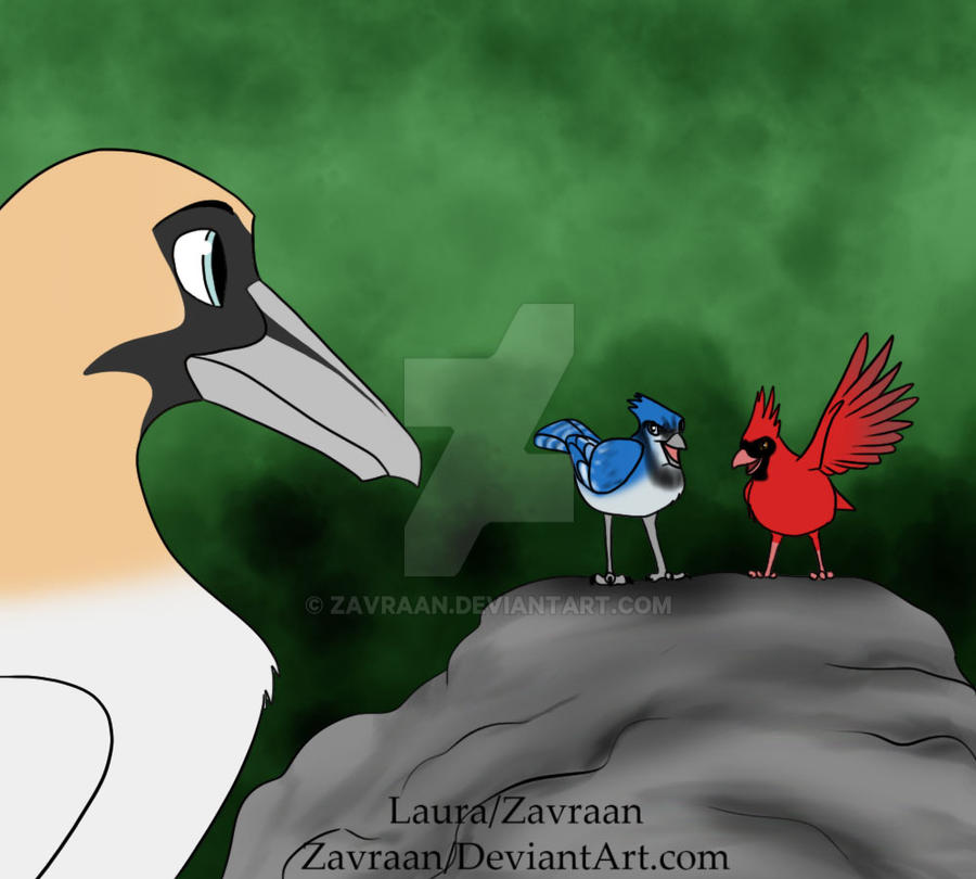 Tiron Bluejay And Cardinal By Zavraan On Deviantart