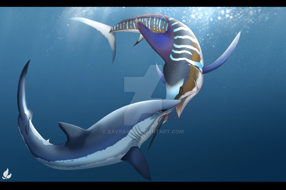 mako shark vs striped marlin by zavraan on deviantart